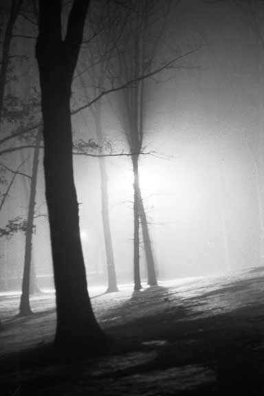 Trees at night in the fog