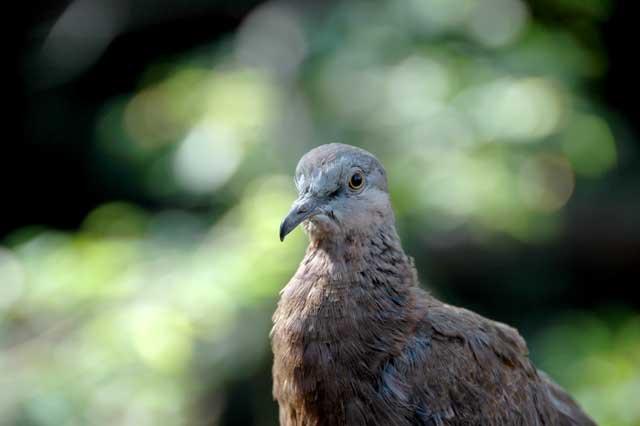 Random Bird