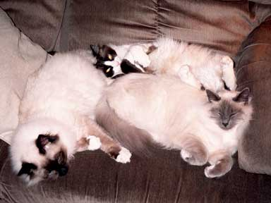 3 Cats on couch