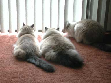 The Boys at the Cat TV