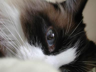 The eye of Miko