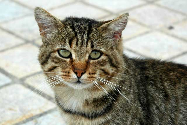 Cat In Dinan France