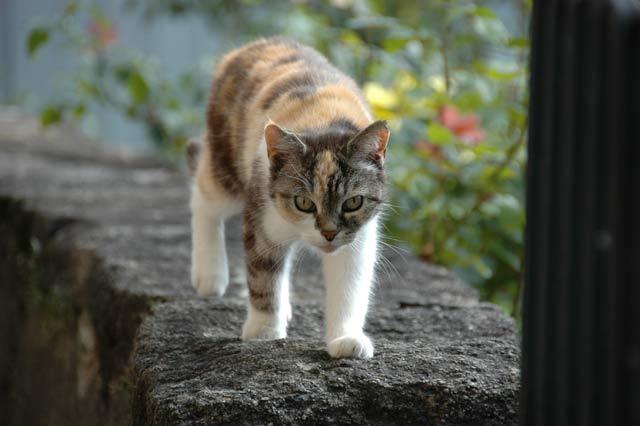 Street Cat In Montreux, Switzerland