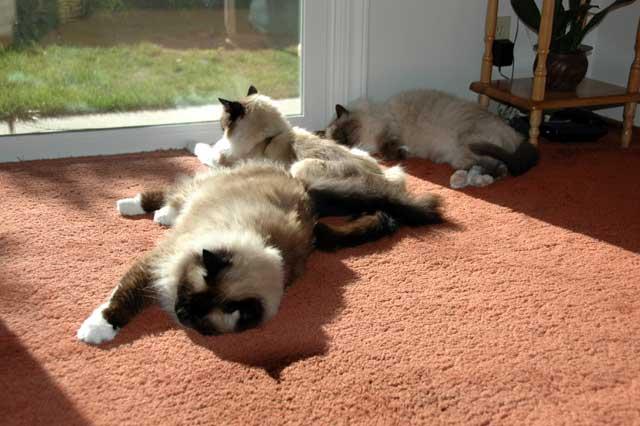 Cats. Arrr.