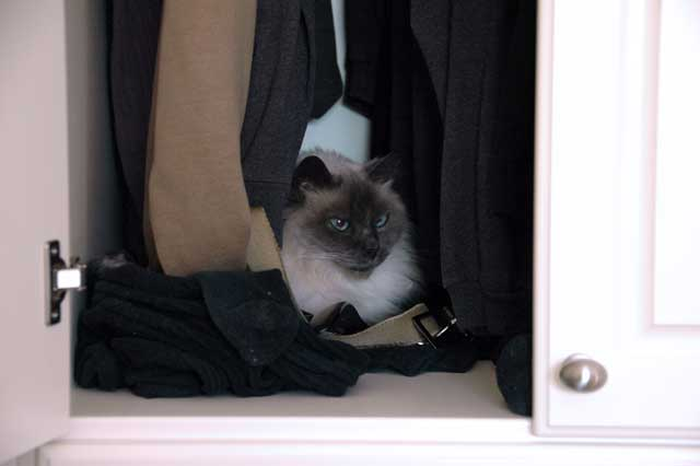 T-chan in closet