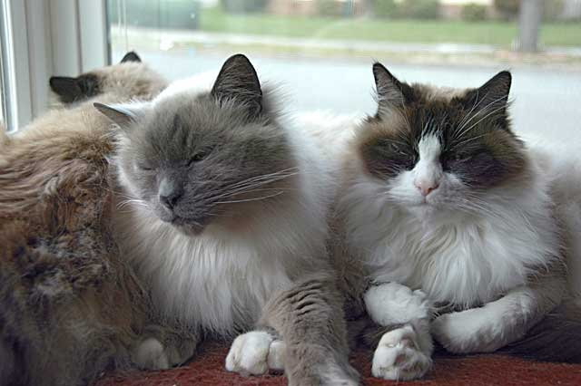 Window Catz