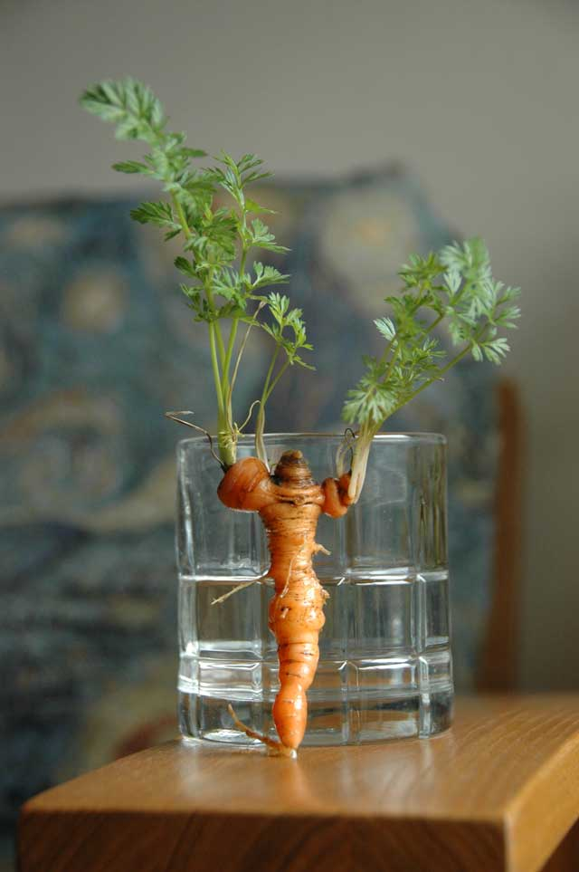 Cheerleader Carrot