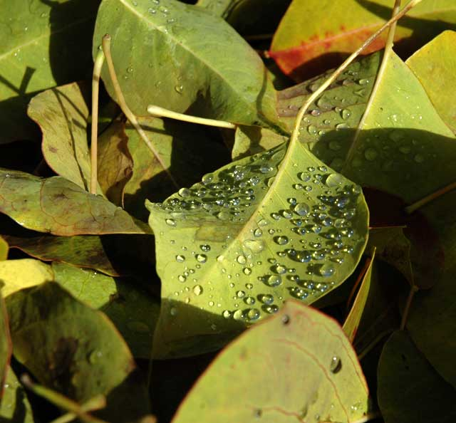 Wet Leaves (Tallow)